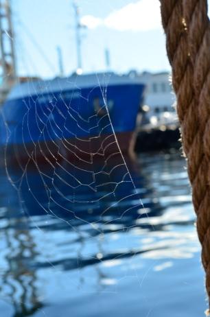Spider web on Medvind