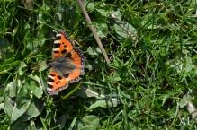 My Butterfly Friend