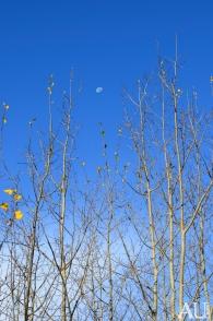Daytime Moon 2